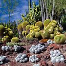 Cactus Collection - The Huntington Garden 1 by David Galson
