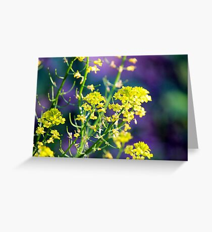 Yellow Rocket Flower Blossoms Greeting Card
