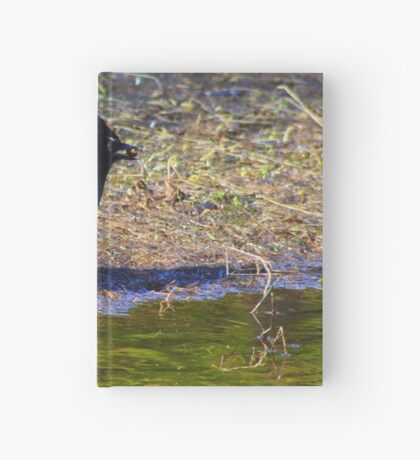 Stellar Jay Hardcover Journal