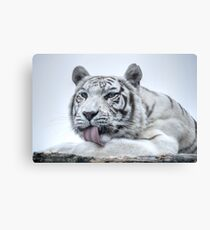 White Bengal Tiger (1) - colour version Canvas Print