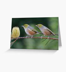 Two Silvereyes Greeting Card