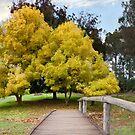 Golden Valley Tree Park by Celine Dubois