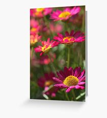 Marguerite Daisy - Madeira Red Greeting Card