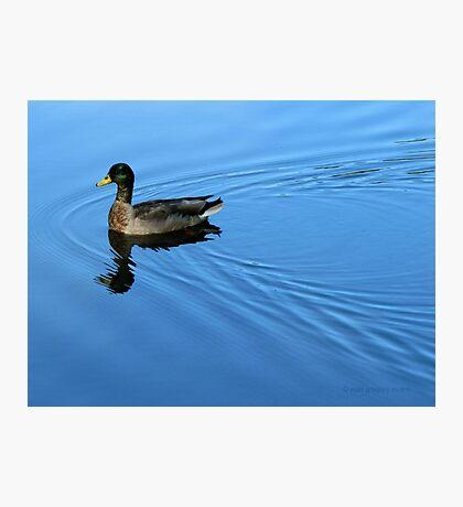 Blue Luxury Photographic Print