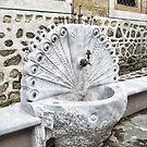 Fountain Peacock by Roberta Angiolani