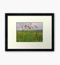 Wild Poppies Framed Print