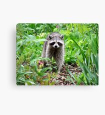 Rainy Day Raccoon Canvas Print