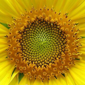 Sunflower by LMAnice