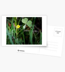 Lone Buttercup and Clover Leaf Postcards