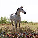 Horse in a Field of Flowers~  by Penny Odom