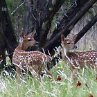 The Twins Fawns by Penny Odom
