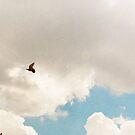 Freedom by Katayoonphotos