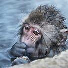 snow monkey in the hot springs by Istvan Hernadi