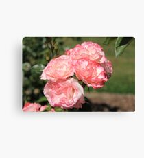 You promised me a Rose Garden, Lithgow NSW Canvas Print