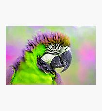 Parrot green Photographic Print