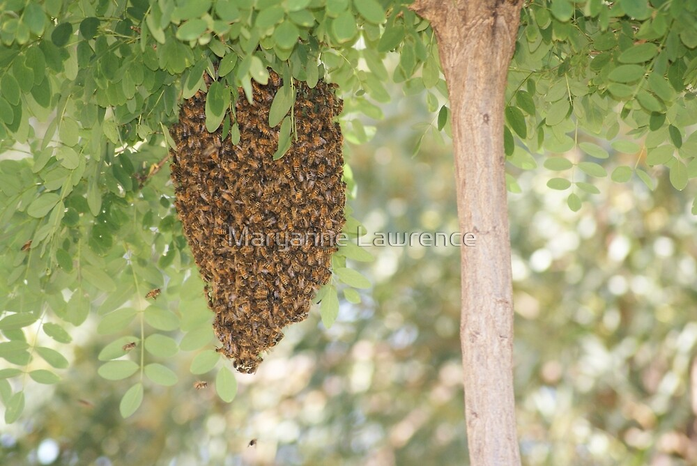 Beehive by Maryanne Lawrence