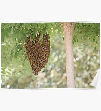 Beehive Poster
