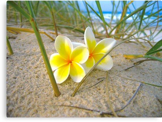 Frangipani Beach. by Raphaela  Sampaio