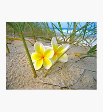 Frangipani Beach. Photographic Print