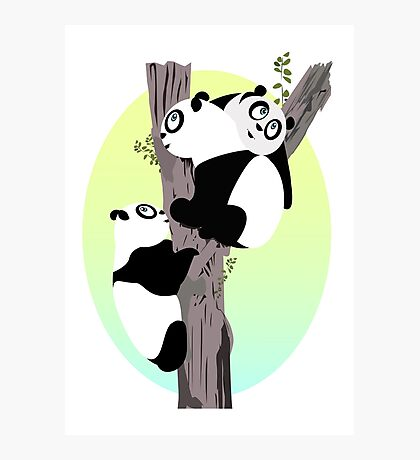 Pandas in a tree Photographic Print