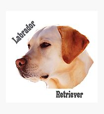 Dog breeds - Labrador Retriever Photographic Print