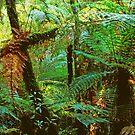Rainforest in New Zealand 2 by Imi Koetz