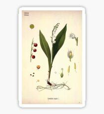 Köhler's Medizinal Pflanzen in naturgetreuen Abbildungen mit kurz erläuterndem Texte  Atlas zur Pharmacopoea 1883 1914 V3 080 Convallaria Majalis Sticker