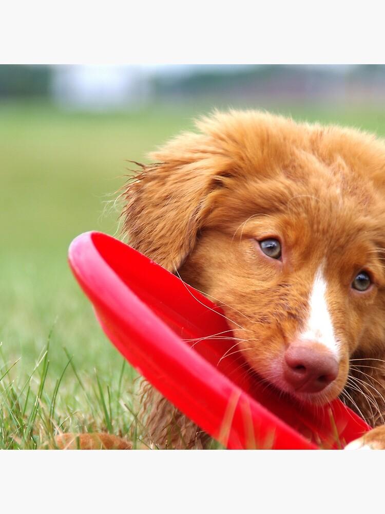 Toller Puppy con disco volador de jfcarlson13
