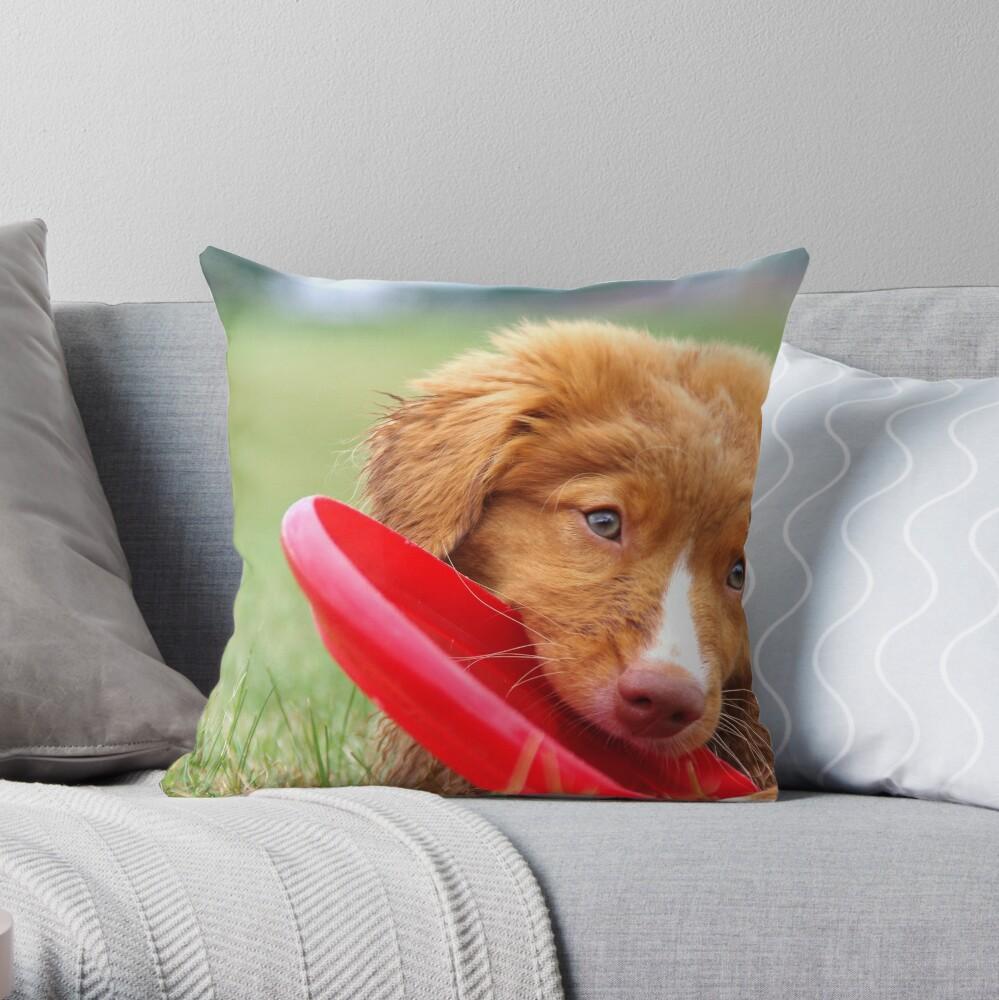 Toller Puppy con disco volador Cojín