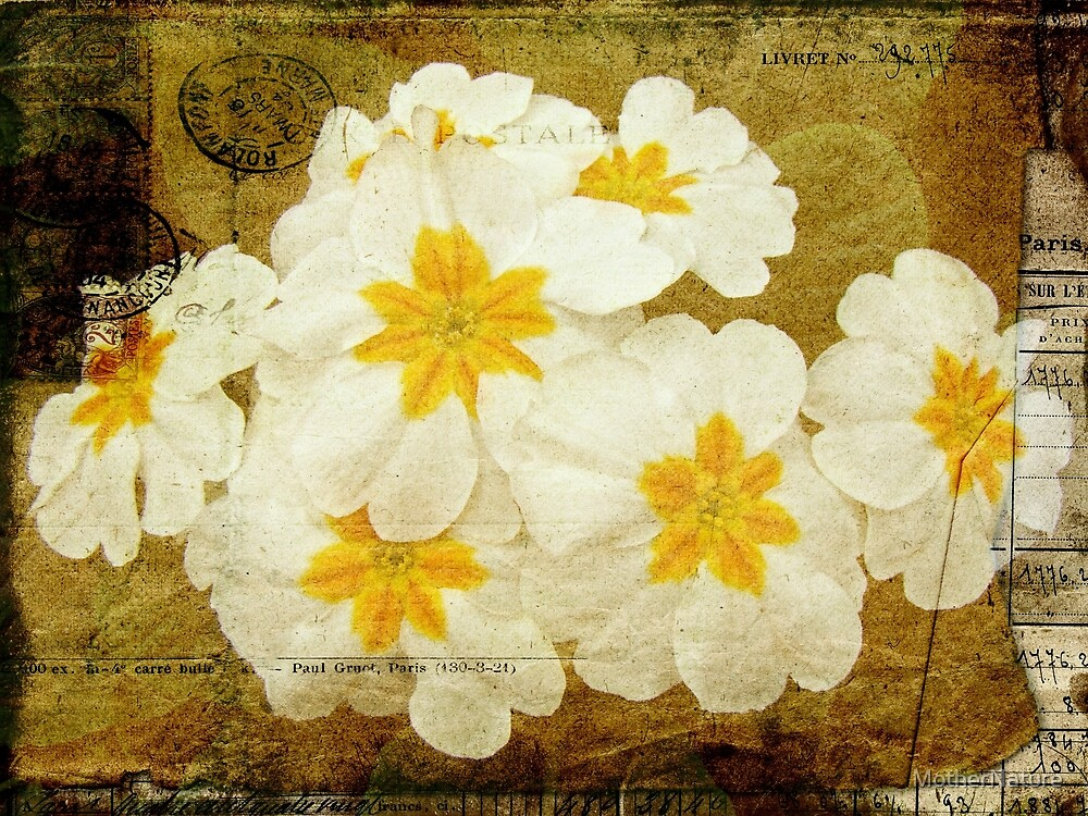 Flowers by Letter - White Primroses by MotherNature