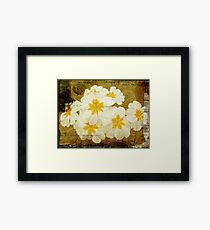 Flowers by Letter - White Primroses Framed Print