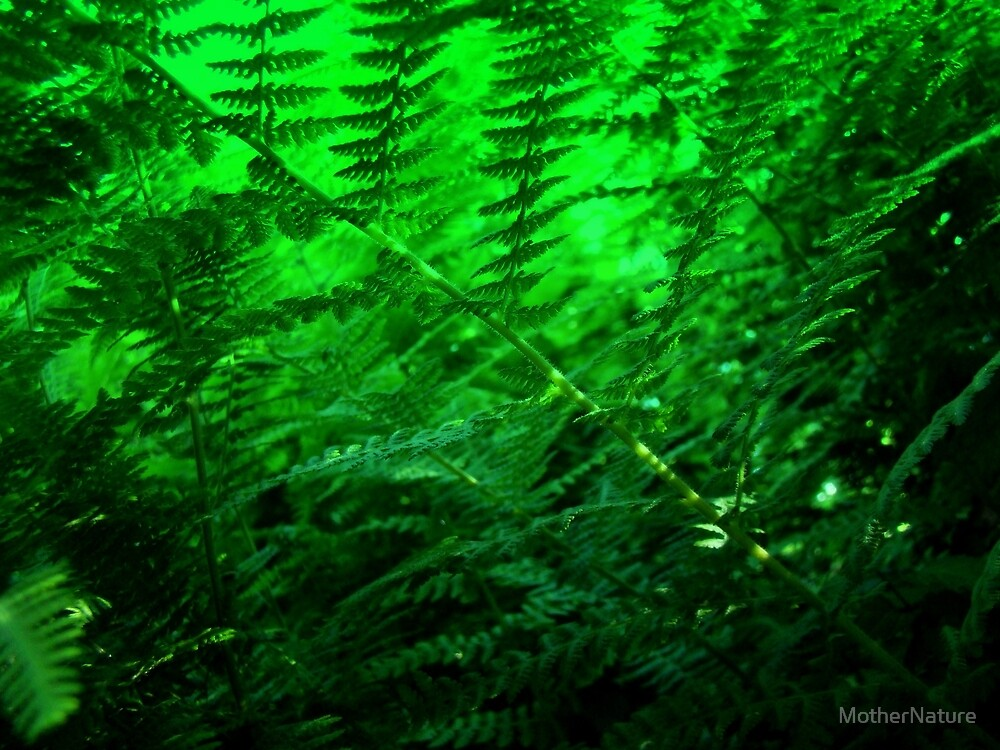 Ferns and Filtered Sunlight by MotherNature