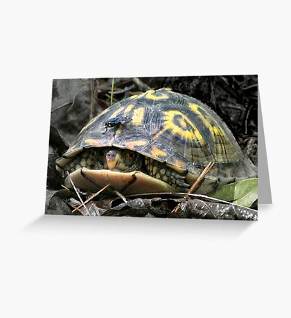 """""""Will you flit a little faster?"""" said the turtle to the fly. Greeting Card"""