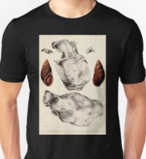 Proceedings of the Zoological Society of London 1848 - 1860 V5 Mollusca 029 T-Shirt