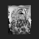 Owl by Morag Anderson