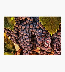 Vinyard Still Life Photographic Print