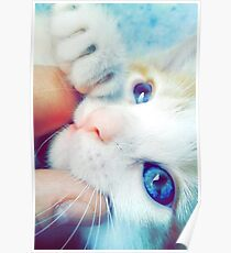 My Cute kitten Poster