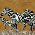 Zebra by Galen Valle