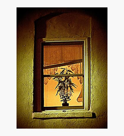 Window With Potted Plant Photographic Print