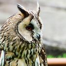 eagle owl by mikeloughlin
