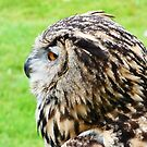 eagle owl in aloof mood by mikeloughlin