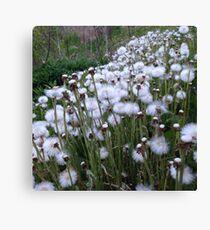 Fleece as White as Snow Canvas Print