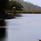 Misty Morning, Waterworks Reserve, South Hobart  by WobblyWombat