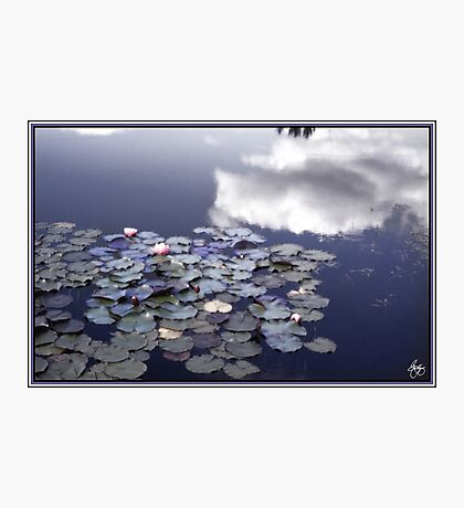 A Glow of Lilies Photographic Print