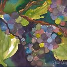 Colors on the Vine by Sally Griffin