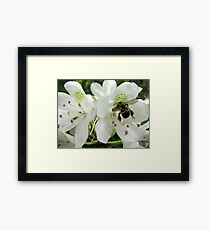 Pollen Packing Bumble Bee Framed Print