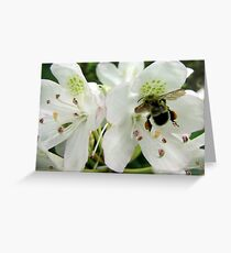 Pollen Packing Bumble Bee Greeting Card