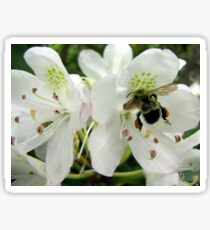 Pollen Packing Bumble Bee Sticker