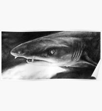 Sarcastic Shark Poster