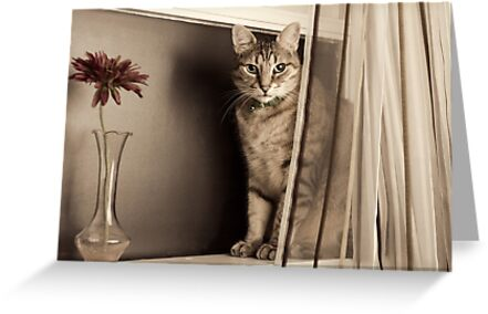 Curtain Call by Tracy Riddell